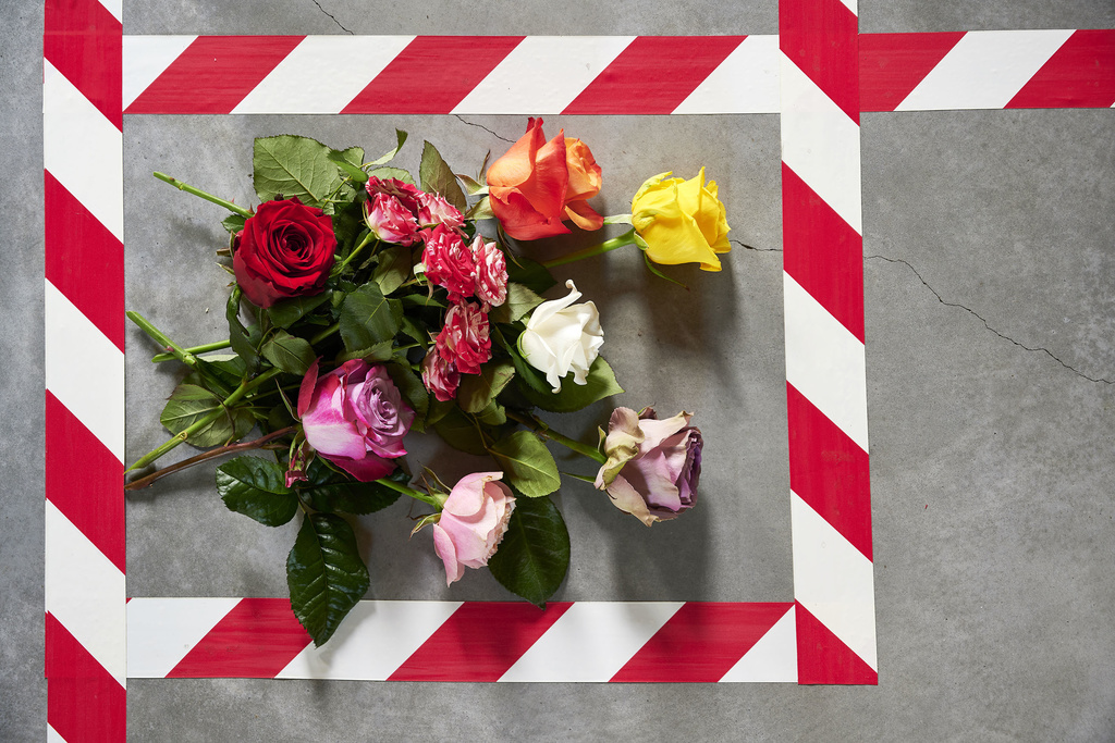 des-fleurs-en-janvier-5